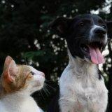 ペットの防災対策!愛猫・愛犬に必要な防災グッズの一覧リストとおすすめを解説