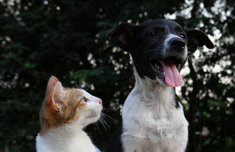 防災グッズ ペット 犬 猫