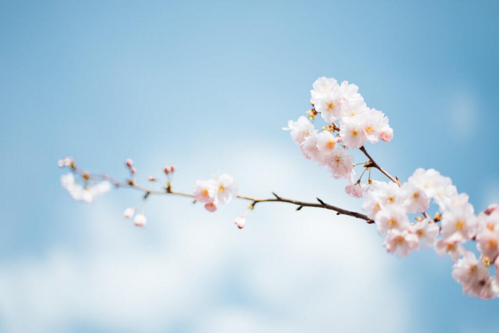 春の自然災害と防災対策!春一番や融雪洪水など春特有の災害の特徴と ...